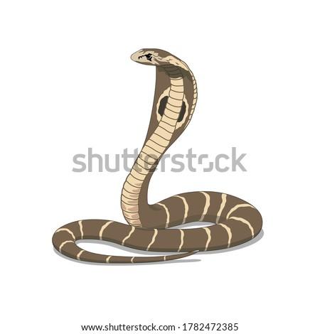 brown king cobra snake animal