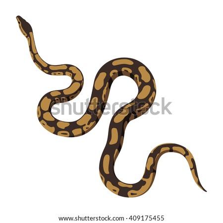 brown python snake vector