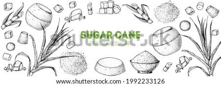 Brown Sugar Organic Unrefined. Sugar cane sketch. Hand drawn vector illustration. Sugar cane sketch. Vintage design template. Panela, Gur or jggery powder.
