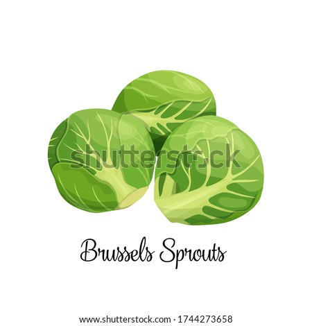 Brussels sprouts vector. Green vegetables in cartoon style. Illustration of a pile of Brussels sprouts. Foto stock ©