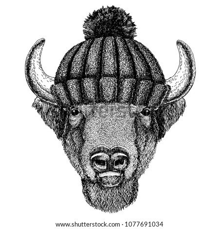 buffalo  bison ox  bull cool