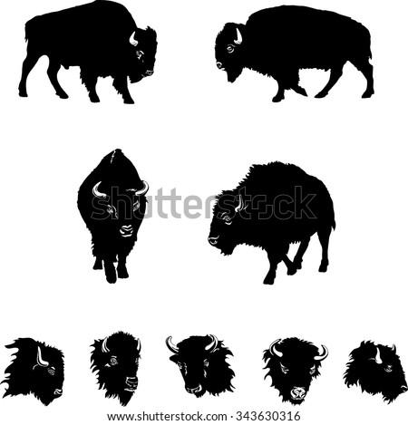 buffalo, color, black, illustration, isolation, figure, silhouette, portrait, various postures of the animal, buffalo head and figure