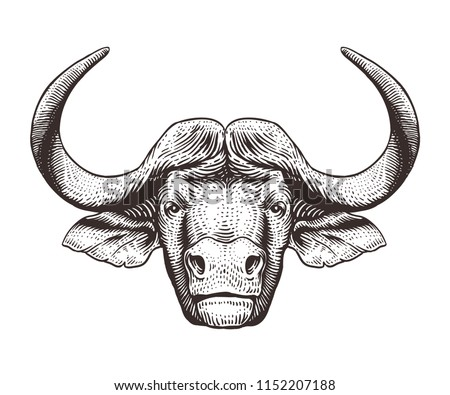 Buffalo head isolated on white background. Hand drawn engraving illustration