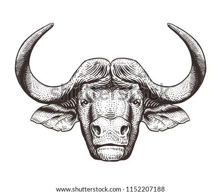 Buffalo head isolated on white background. Hand drawn engraving illustration