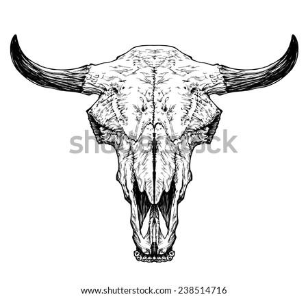 bull   auroch skull with horns