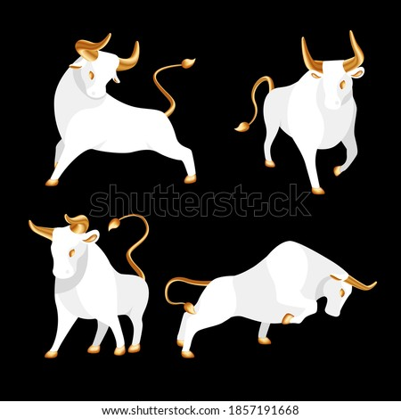 Bull set with golden horns, hooves and tail. Collection ox, symbol of 2021 Chinese New Year. White bulls standing in different poses. Trending flat logo or icon isolated. Vector stock illustration.
