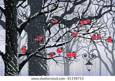 bullfinches on trees in winter