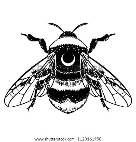 Queen Bee Random Royalty Free Vectors