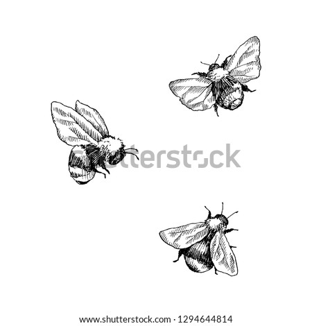 Bumblebee set. Hand drawn vector illustration. Vector drawing of tree honeybee. Hand drawn insect sketch isolated on white. Engraving style bumble bee illustrations. Stockfoto ©