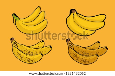 Bunch of banana. Set of Different colors, Barely Ripe, Ripe, very Ripe, and Overripe color. Isolated on background - Fruit Vector