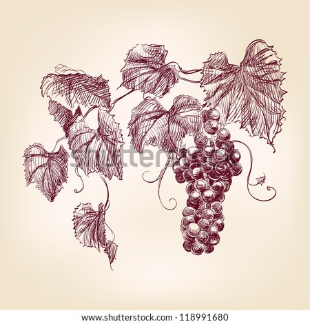 bunch of  grapes  hand drawn vintage  vector illustration