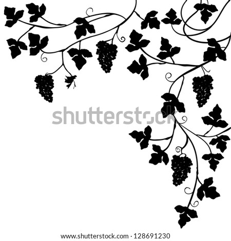 Bunch of grapes, plant background - vector illustration