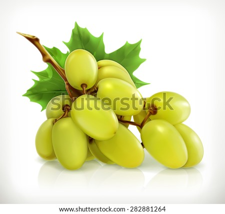 bunch of grapes  vector icon