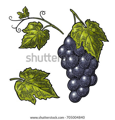 bunch of grapes with berry and