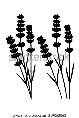 Bunch of lavender flowers and lavender flowers separated black silhouette vector