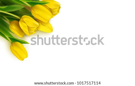 bunch of spring yellow tulips