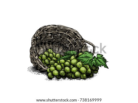 bunches of grape in the wicker