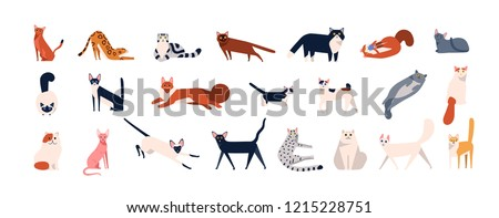 Bundle of adorable cats of various breeds sitting, lying, walking. Set of cute funny pets or domestic animals with colorful coats isolated on white background. Flat cartoon vector illustration.