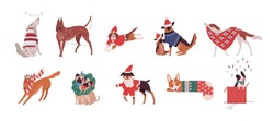 Bundle of cute dogs of different breeds dressed in Christmas costumes or playing with holiday decorations. Set of cartoon domestic animals isolated on white background. Festive vector illustration.