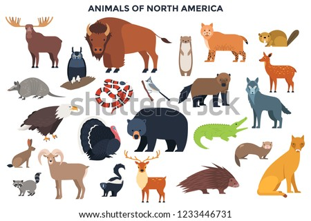 bundle of wild forest animals