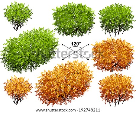 Bush. Isometric trees in vector