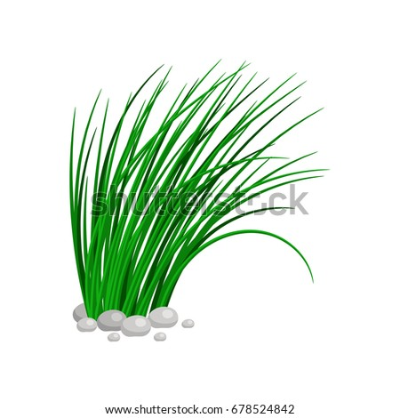 tanda ceklis png png image tall grass png stunning free transparent png clipart images free download tanda ceklis png png image tall grass