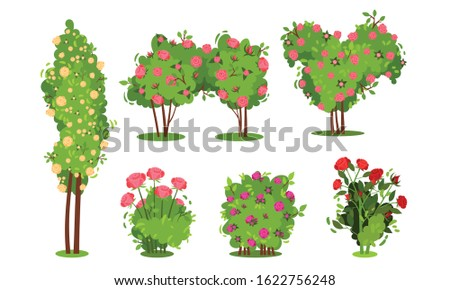bushes of roses isolated on