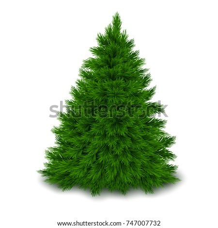 Bushy unadorned Christmas tree with shadow isolated on white background. Realistic vector illustration.