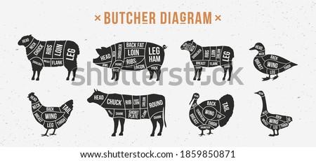 Butcher diagram, scheme set. Mutton, Lamb, Pork, Duck, Chicken, Turkey, Goose meat cuts. Cuts of meat set for butchery, meat shop, restaurant, grocery store. Vector illustration
