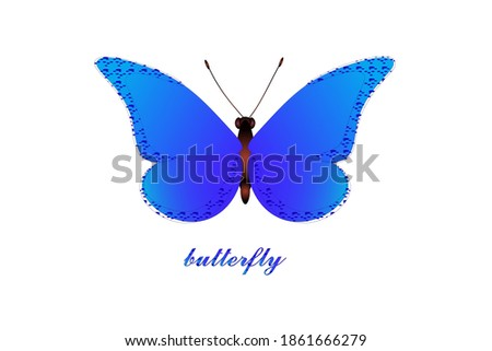 butterflya blue butterfly with