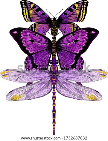 butterfly and dragonfly purple