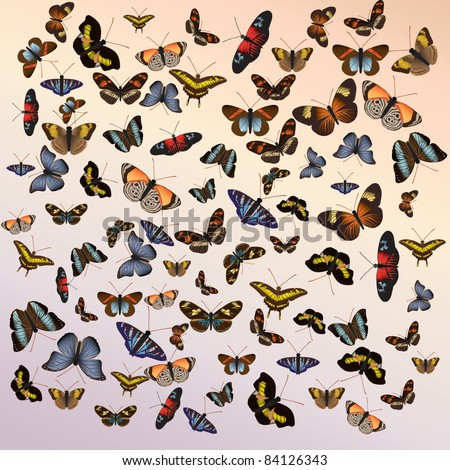 Butterfly background with butterflies in various shapes and sizes