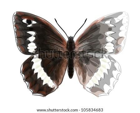 butterfly brintesia circe