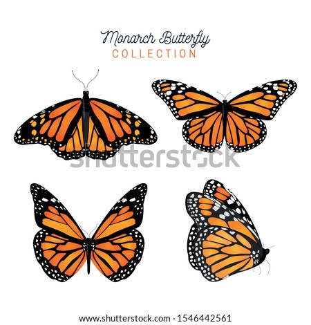 Butterfly collection vector animals natural.Vector