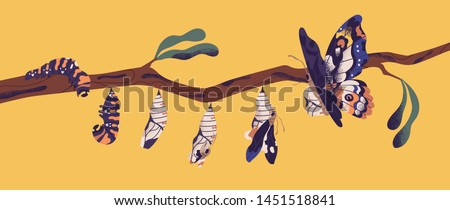 Butterfly development stages - caterpillar larva, pupa, imago. Life cycle, metamorphosis or transformation process of beautiful flying winged insect on tree branch. Flat cartoon vector illustration.