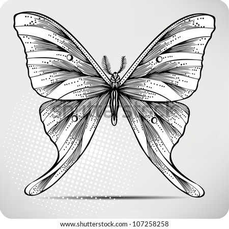 Butterfly, hand drawing. Vector illustration.