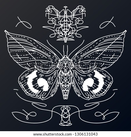 e6cdd7730 Butterfly hand drawn collection. Beautiful Swallowtail boho t-shirt design.  Mystical esoteric symbol