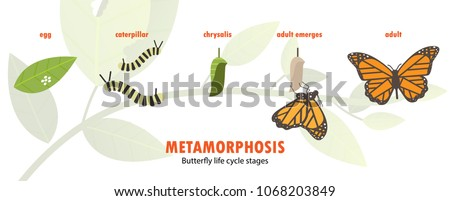 butterfly life cycle metamorphosis