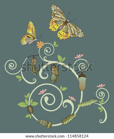 Butterfly life cycle, Vector illustration with simple gradients - stock vector