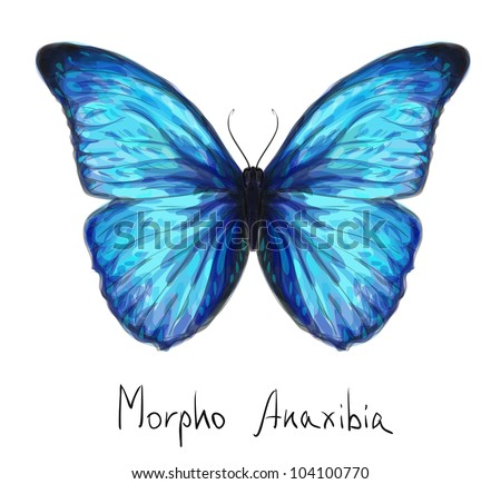 butterfly morpho anaxibia
