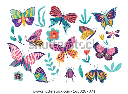 butterfly moth insect vector