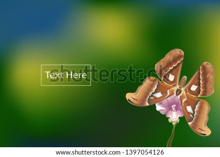butterfly on flower and take