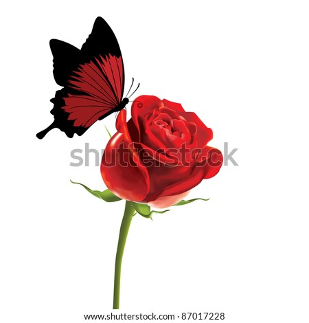 butterfly on rose - stock vector
