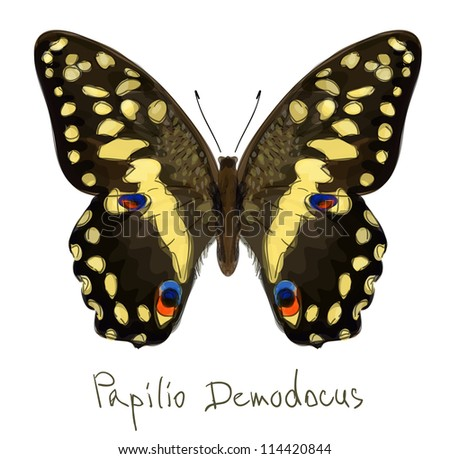 Butterfly Papilio Demodocus. Watercolor imitation. Vector illustration.