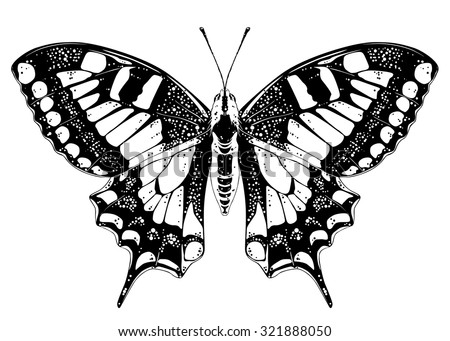 butterfly papillo machaon on