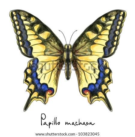 Butterfly Papillo Machaon. Watercolor imitation. Vector illustration.