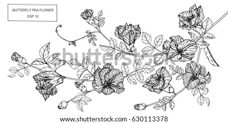 Black and white sweet pea flowers download free vector art stock butterfly pea flowers drawing and sketch with line art on white backgrounds mightylinksfo Gallery