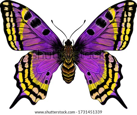 butterfly purple yellow morph