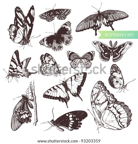 butterfly set  entomological