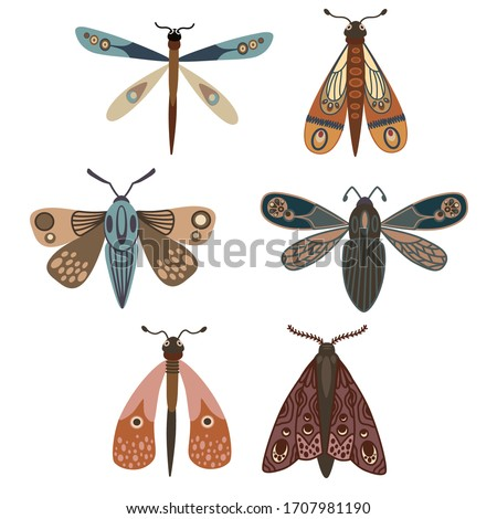 Butterfly. Seth night moths. Insects. Simple vector illustration. ストックフォト ©